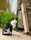 Sitting cat. On the nature Stock Photos