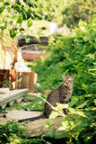A sitting cat in backyard Stock Image
