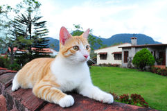 Sitting Cat Royalty Free Stock Images