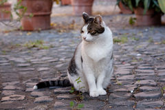 Sitting cat. Sitting black and white cat outdoor Stock Photography