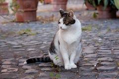 Sitting cat Stock Photography