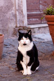 Sitting cat. Sitting black and white cat outdoor Stock Images
