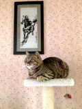 SITTING CAT AND GALLOPING HORSE. Pet cat was siting on the cat climbing frame,   and  a cross embroidery of a galloping horse on the wall Stock Photo