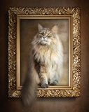 The sitting cat in gold frame.  Royalty Free Stock Photo