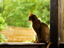 Sitting cat. In the hut Stock Image
