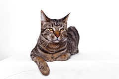 A sitting cat isolated on white Stock Photos
