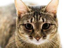 Sitting cat Stock Image