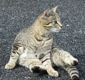 Sitting cat. On the road Stock Photo