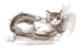 Sitting cat sketch Royalty Free Stock Images