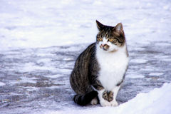 Sitting Cat in the snow Royalty Free Stock Images