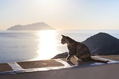 Sailing yacht on the sea. Sitting cat, Sunset near Greece islands, Cyclades, Milos Stock Photo