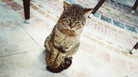 Sitting cat. Sitting turkish cat gorgeous thinking royalty free stock photo