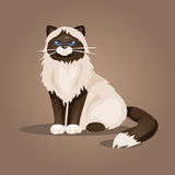 Sitting cat. Vector Illustration Stock Photography