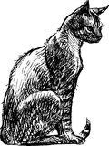 Sitting cat Stock Images
