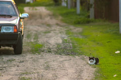 Sitting cat in the yard near car. At rural scape Royalty Free Stock Image