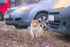 Sitting cat in the yard near cars. Dogs chasing sitting cat in the yard near cars Royalty Free Stock Photography