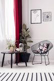 Sitting corner with plant. Cozy sitting corner with plant, metal armchair and black table in living room interior Royalty Free Stock Images
