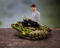 Sitting cozy on a toad and working on laptop Royalty Free Stock Images