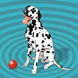 Sitting dalmatian with a ball royalty free stock photo