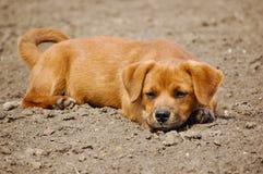 Sitting Dog royalty free stock photography