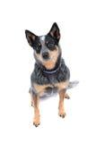 Sitting Dog Stock Photo