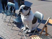 Sitting dog Royalty Free Stock Photo