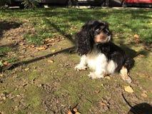 Sitting dog. Little dog sitting on the ground Royalty Free Stock Image