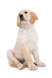Sitting dog looking up Stock Image