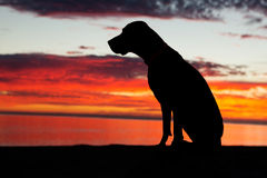 Sitting dog in the sunset Royalty Free Stock Photo