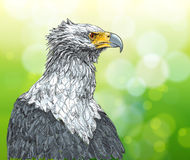 Sitting eagle. And green background Royalty Free Stock Image