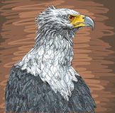 Sitting eagle - drawing Stock Photos