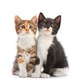 Sitting för två kattunge royaltyfria foton