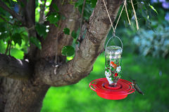Sitting on the feeder Royalty Free Stock Photography