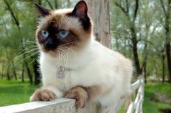 Sitting on fence stock photo