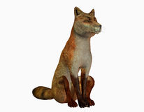 Sitting fox Royalty Free Stock Photo