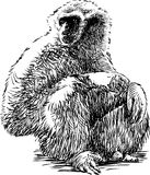 Sitting gibbon. Vector drawing of a sitting monkey Royalty Free Stock Photos