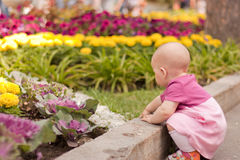 Sitting girl looking to flower Royalty Free Stock Photo