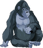 Sitting Gorilla Royalty Free Stock Images