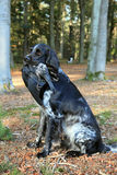 Sitting hunting dog with crow Royalty Free Stock Photography