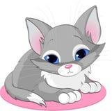 Sitting kitten Stock Image
