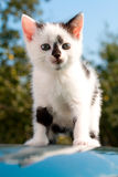 Sitting kitten on car Royalty Free Stock Images