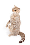 Sitting kitten or cat  striped meditation Royalty Free Stock Photos