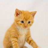 Sitting kitten Stock Photo