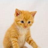 Sitting kitten stock photo