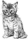 Sitting kitten vector illustration