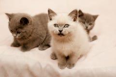 Sitting kittens Stock Images