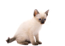 Sitting kitty Royalty Free Stock Images