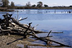 Sitting by the lake. A detail of the lake`s river Royalty Free Stock Photography