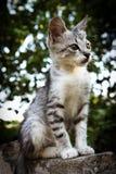 Sitting little Kitten. Kitten sitting on the fence Royalty Free Stock Photography