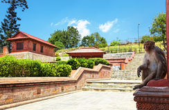 Sitting monkey in Pashupatinath Royalty Free Stock Photo